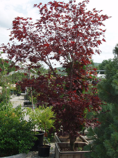 Whiteteail Acres Garden Center